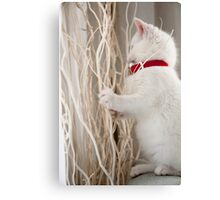 Kitten (Odin) with Twigs  Canvas Print