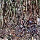Bicycle and Tree by David Clarke