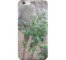 Kudu iPhone Case/Skin