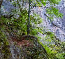 Beautiful gorge in Carpathian mountains Sticker