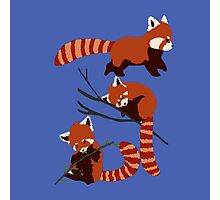 Red Panda sleep cute Photographic Print