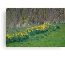 River of Daffodils Canvas Print