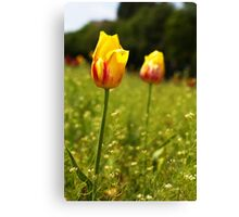 yellow and pink tulips Canvas Print