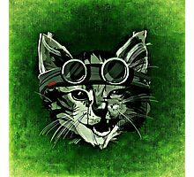 Funny Cat Photographic Print