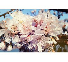 spring blooming Photographic Print