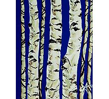 Sleeping Giants Aspen Trees Grove Old Winter Sky Blue White Trunks Strong Powerful Photographic Print