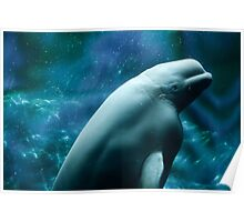 Beautiful Beluga Whale Poster