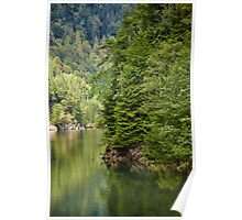 Lake and pine trees Poster