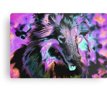 Collie 2 Metal Print