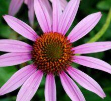 Echinacea (Purple Coneflower) Sticker