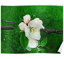 apple blooming Poster
