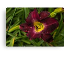 Deep Red Daylily With Raindrops Canvas Print