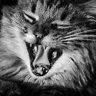 Hear my roar... by Mark Williams