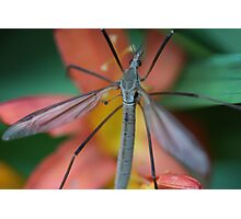 Daddy Long Legs on Flower Photographic Print