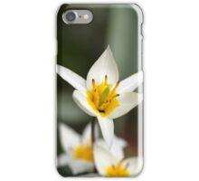 The wild tulip Tulipa turkestanica from Central Asia. iPhone Case/Skin