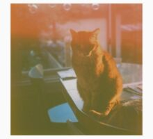 Dreamy Cat - Yashica Medium Format Photograph One Piece - Long Sleeve