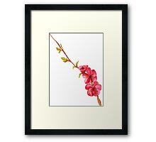 pink flowers and green leaves on a tree branch Framed Print