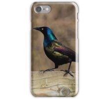Common Grackle Strutting iPhone Case/Skin