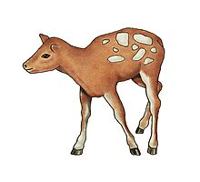 Little Fawn, Original Color Pencil Drawing, Wildlife Art Photographic Print