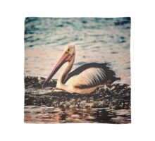 Pelican at sunrise Scarf