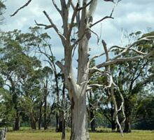 Dead Tree makes a statement - still Beautiful Sticker