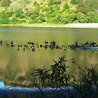 *Crater Lake in Tower Hill Extinct Volcano - Koroit* by EdsMum