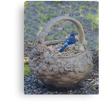 Blue Jay in Flower Pot Basket Canvas Print