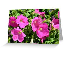 Pink flowers natural background. Greeting Card