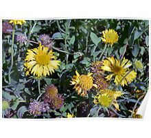 Yellow flowers in the garden. Poster