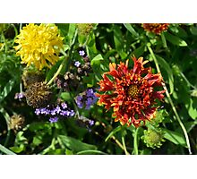 Beautiful colorful flowers in the garden. Photographic Print