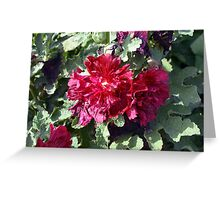 Beautiful red purple flowers and green leaves. Greeting Card