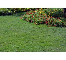 Green lawn and small flowers. Photographic Print