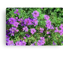 Purple flowers and green leaves bush. Canvas Print