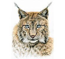 The Lynx - Der Luchs Photographic Print