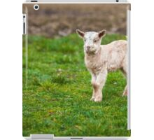 Baby goat on a meadow with copyspace iPad Case/Skin