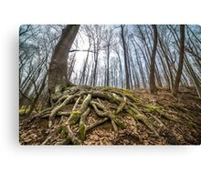 Forest landscape Canvas Print