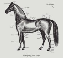 Identifying your horse by Paul McClintock
