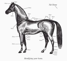 Identifying your horse One Piece - Long Sleeve