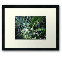 Rainforest Tree Ferns Fraser Island Australia Framed Print