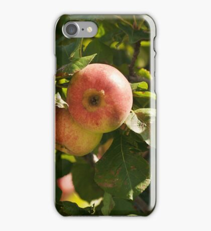 branch with three ripe apples iPhone Case/Skin