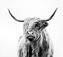 portrait of a highland cow (landscape format) by Dorit Fuhg