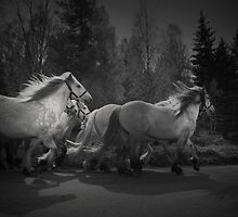 the queen's horses by Dorit Fuhg