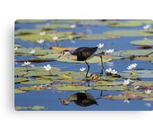 Tripping The Lillypads Canvas Print