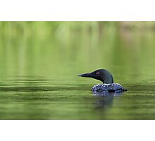 Cool and green and shady - Common loon Photographic Print
