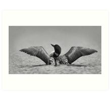 Common loon in black and white Art Print