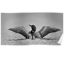 Common loon in black and white Poster