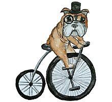 English bulldog riding a penny-farthing Photographic Print