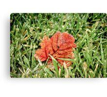 Frozen Leaf in Grass Canvas Print
