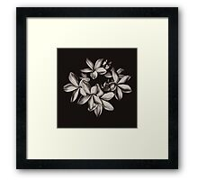 Black and white plumeria Framed Print