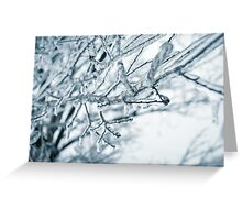 Ice on Tree Branch Greeting Card